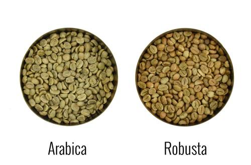 Czym się różni Robusta od Arabiki?