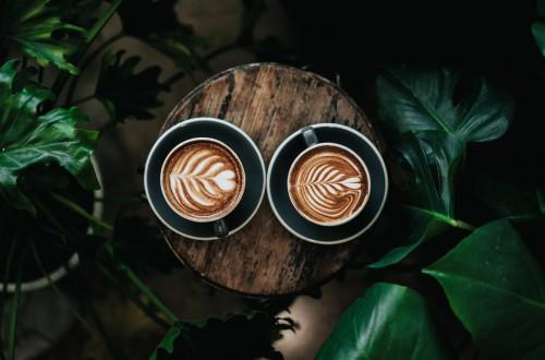 Plantacja kawy w domu?
