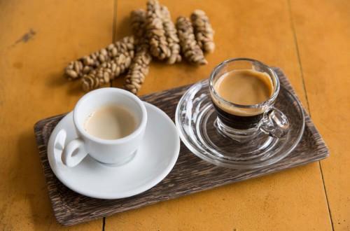 Kopi Luwak, czyli kawa z odchodów. Czy warto jej spróbować?